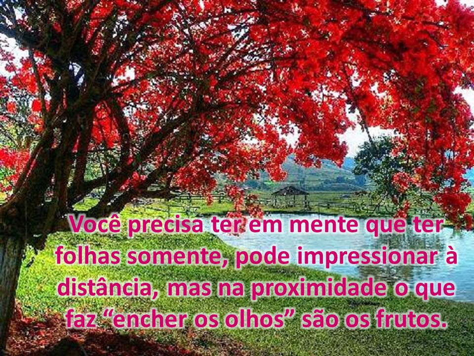 Você precisa ter em mente que ter folhas somente, pode impressionar à distância, mas na proximidade o que faz encher os olhos são os frutos.