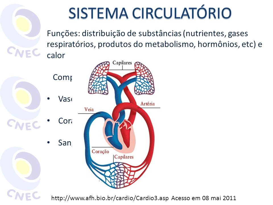 SISTEMA CIRCULATÓRIO Funções: distribuição de substâncias (nutrientes, gases respiratórios, produtos do metabolismo, hormônios, etc) e calor.