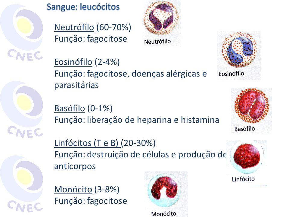 Sangue: leucócitos Neutrófilo (60-70%) Função: fagocitose. Eosinófilo (2-4%) Função: fagocitose, doenças alérgicas e.