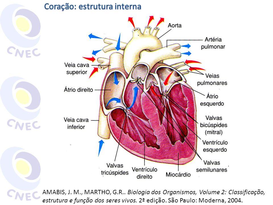 Coração: estrutura interna