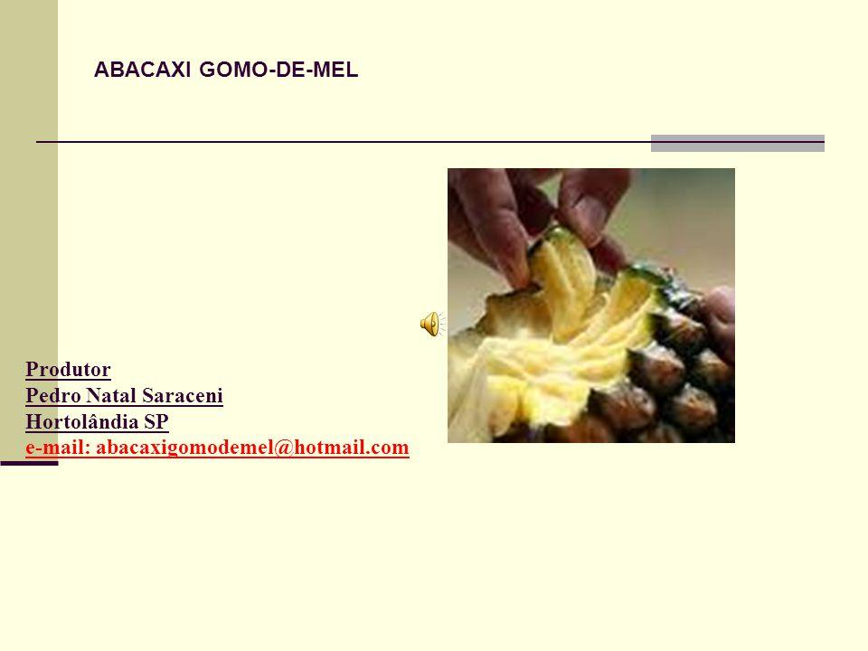 Produtor Pedro Natal Saraceni Hortolândia SP e-mail: abacaxigomodemel@hotmail.com