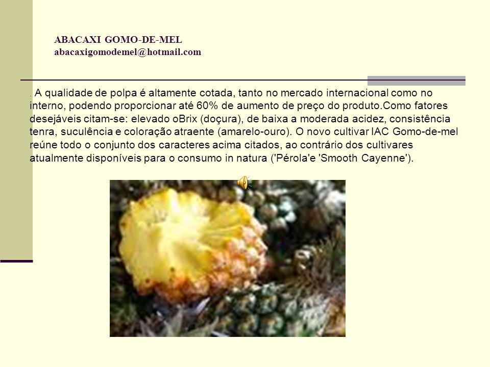 ABACAXI GOMO-DE-MEL abacaxigomodemel@hotmail.com