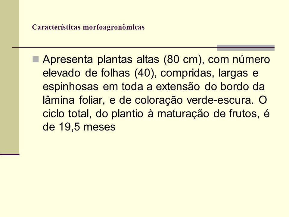 Características morfoagronômicas