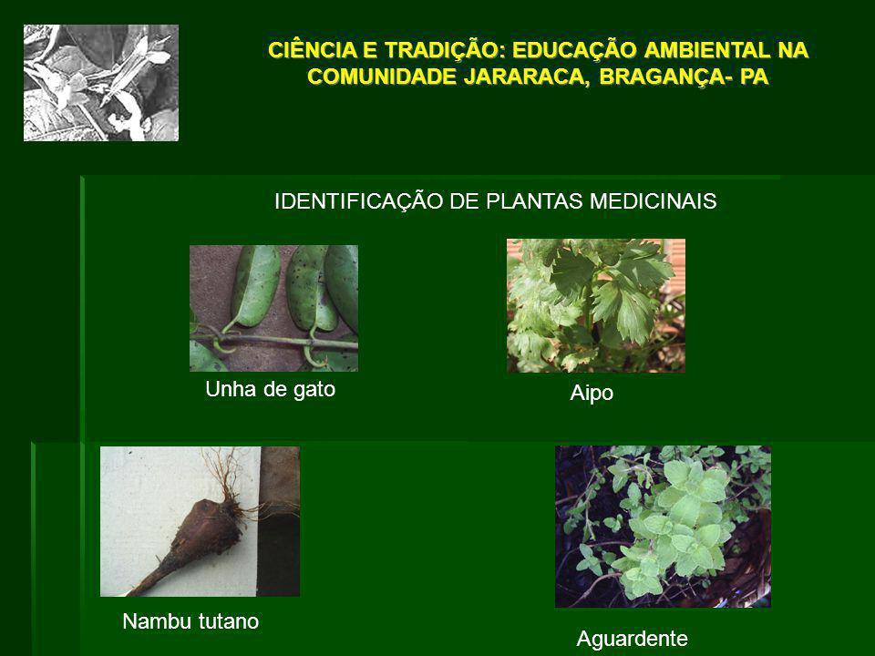 IDENTIFICAÇÃO DE PLANTAS MEDICINAIS