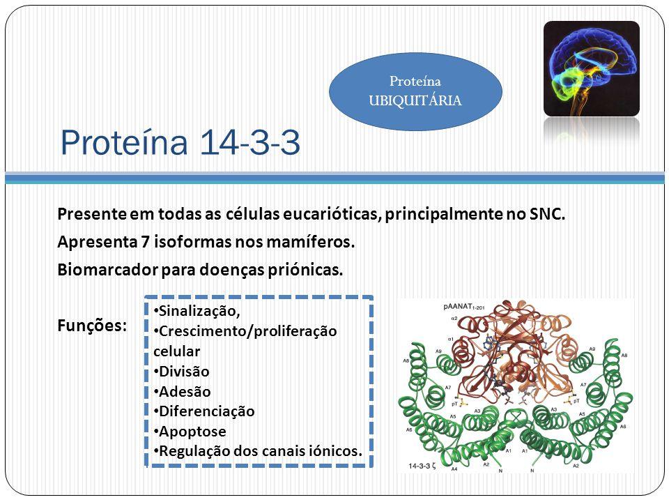 Proteína UBIQUITÁRIA Proteína 14-3-3. Presente em todas as células eucarióticas, principalmente no SNC.