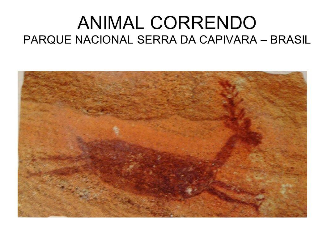 ANIMAL CORRENDO PARQUE NACIONAL SERRA DA CAPIVARA – BRASIL