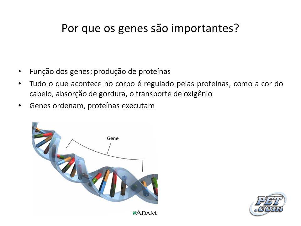 Por que os genes são importantes