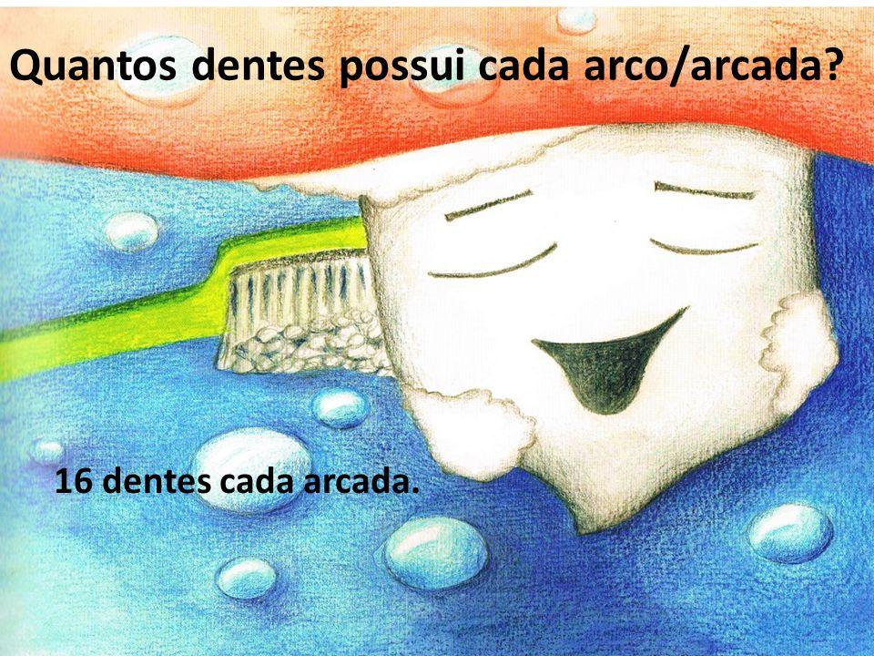 Quantos dentes possui cada arco/arcada