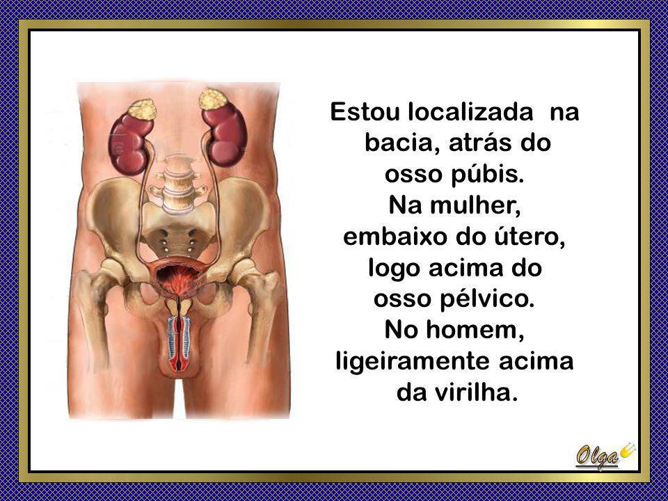 Estou localizada na bacia, atrás do. osso púbis. Na mulher, embaixo do útero, logo acima do. osso pélvico.