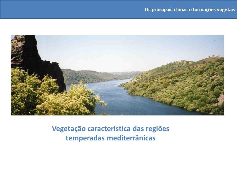 Vegetação característica das regiões temperadas mediterrânicas