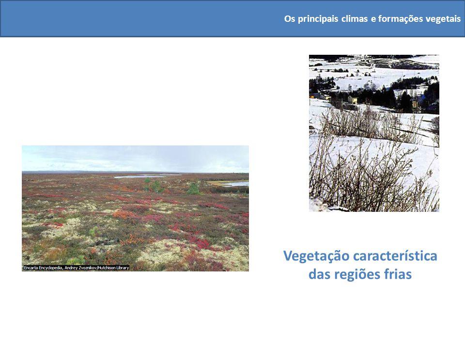 Vegetação característica das regiões frias