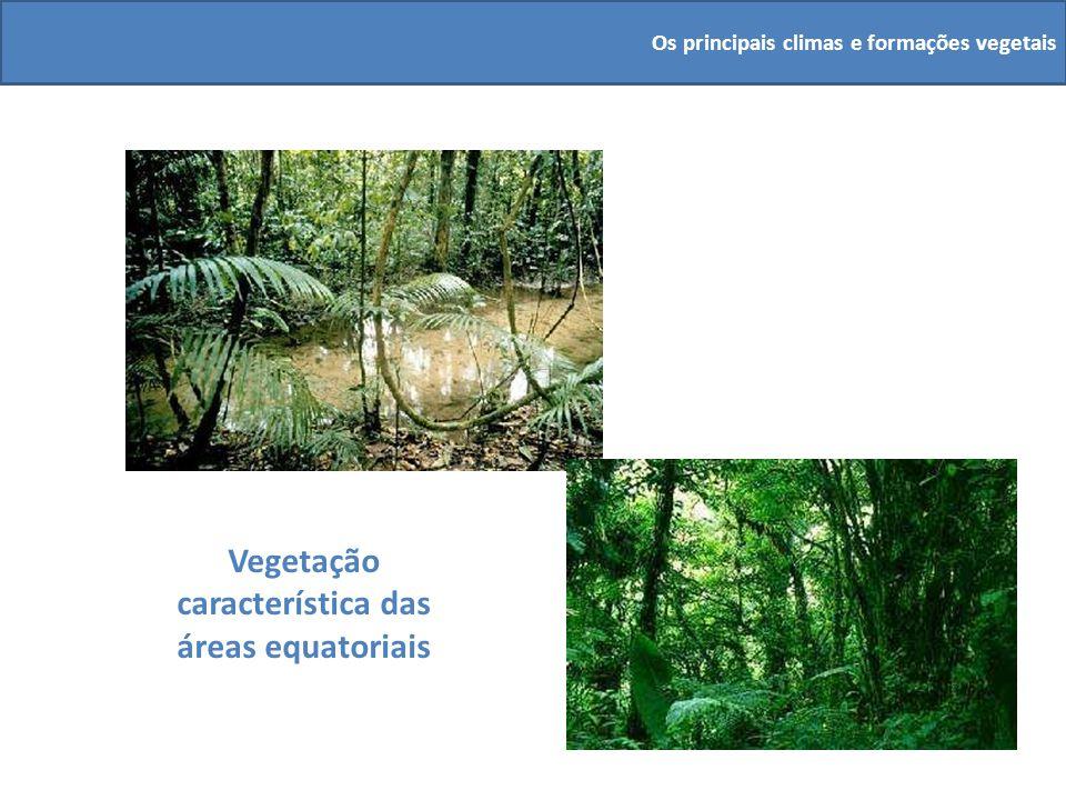 Vegetação característica das áreas equatoriais