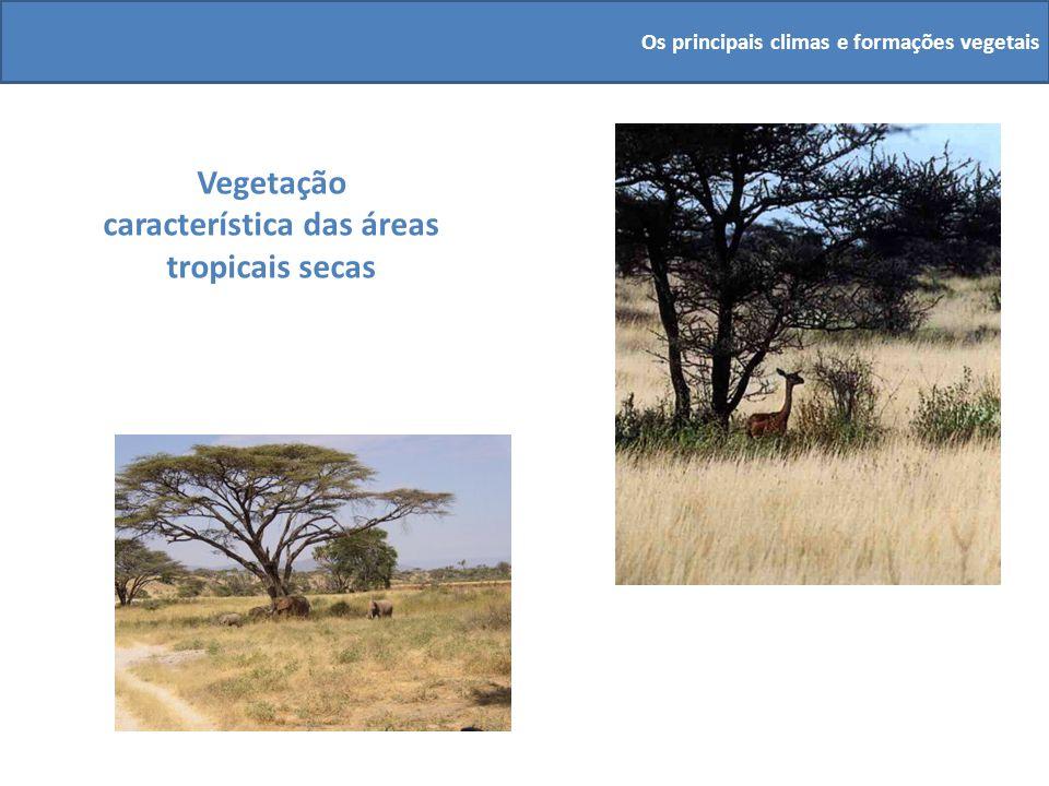 Vegetação característica das áreas tropicais secas
