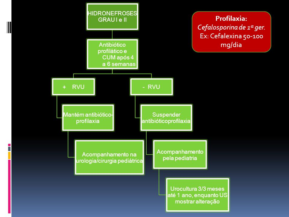 Ex: Cefalexina 50-100 mg/dia
