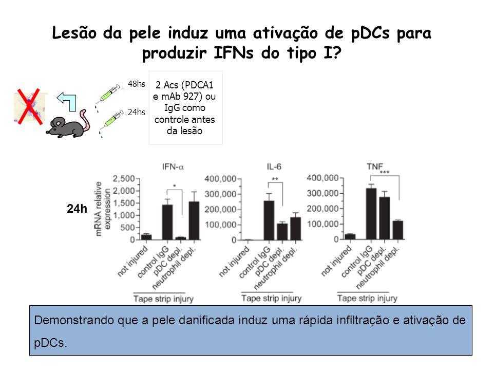 Lesão da pele induz uma ativação de pDCs para produzir IFNs do tipo I