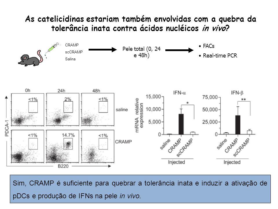 As catelicidinas estariam também envolvidas com a quebra da tolerância inata contra ácidos nucléicos in vivo