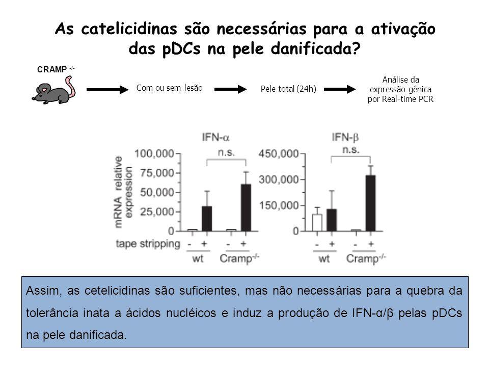 As catelicidinas são necessárias para a ativação