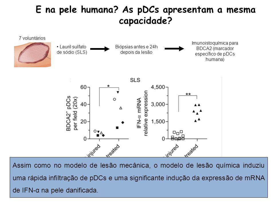 E na pele humana As pDCs apresentam a mesma capacidade