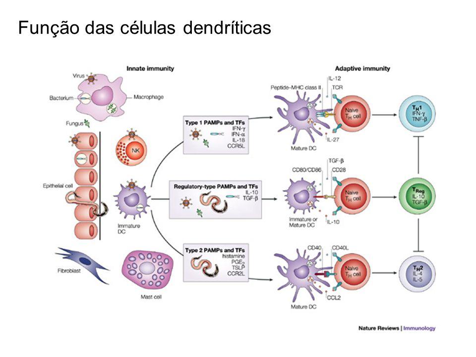 Função das células dendríticas