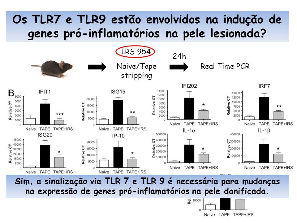 Os TLR7 e TLR9 estão envolvidos na indução de genes pró-inflamatórios na pele lesionada