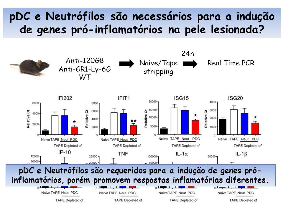 pDC e Neutrófilos são necessários para a indução de genes pró-inflamatórios na pele lesionada