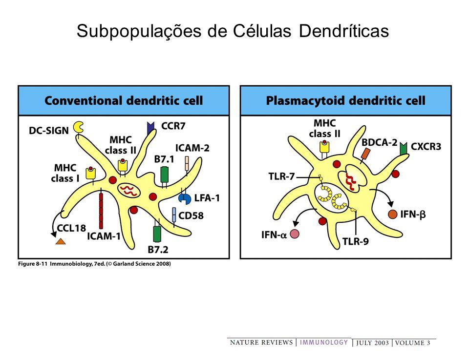Subpopulações de Células Dendríticas