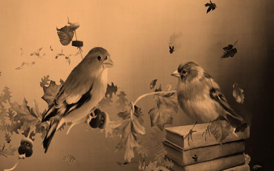 O Som dos Pássaros