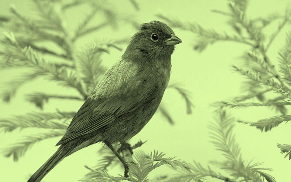 Texto: Gotas de Paz Música:Pássaros-Serenata. Formatação: bvbiavasconcellos@gmail.com. BIAJOVA SLIDES.