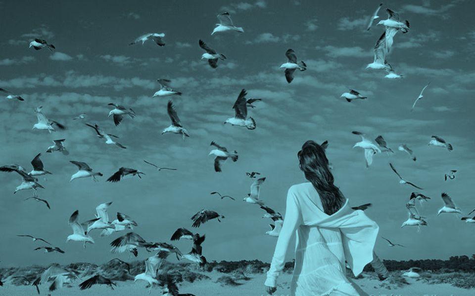 Apenas por hoje, procure perceber o som dos pássaros