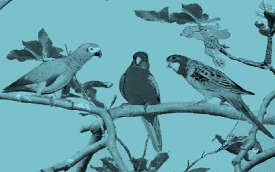 Perceba que a felicidade dos pássaros independe dos acontecimentos a sua volta, simplesmente cantam e sentem-se bem...