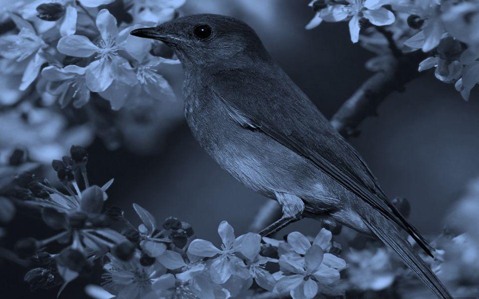 Buscamos a felicidade em qualquer lugar, menos na natureza...