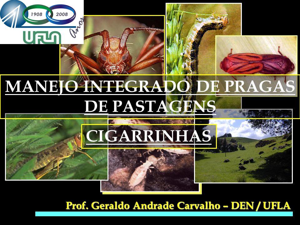 MANEJO INTEGRADO DE PRAGAS DE PASTAGENS
