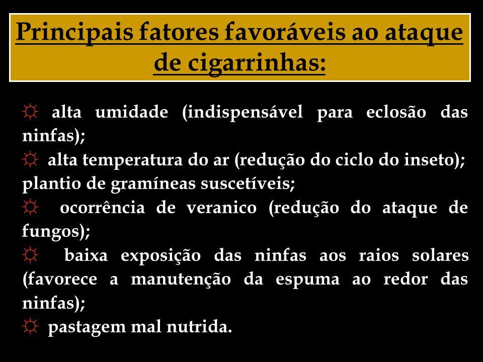 Principais fatores favoráveis ao ataque de cigarrinhas:
