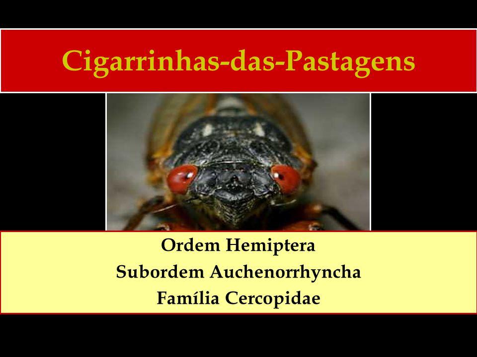 Cigarrinhas-das-Pastagens