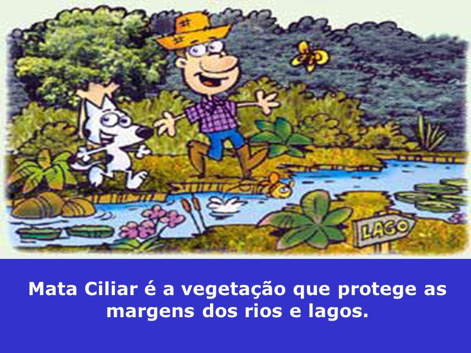 Mata Ciliar é a vegetação que protege as margens dos rios e lagos.