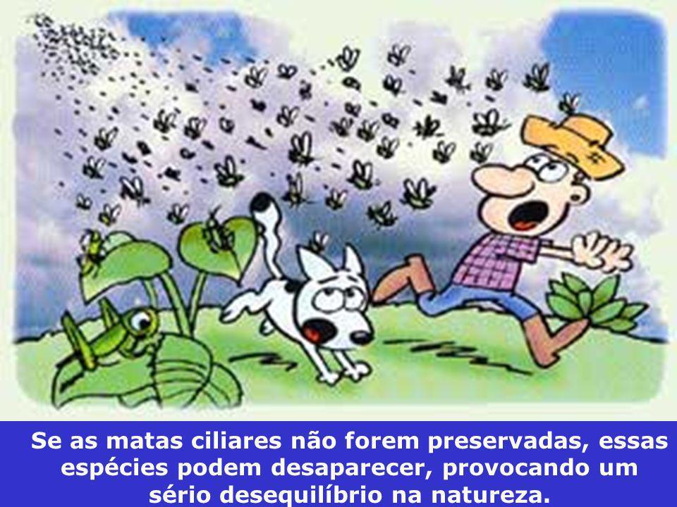 Se as matas ciliares não forem preservadas, essas espécies podem desaparecer, provocando um sério desequilíbrio na natureza.