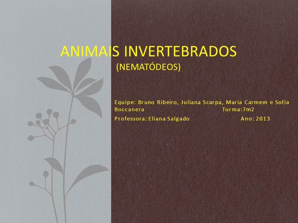 Animais Invertebrados (Nematódeos)