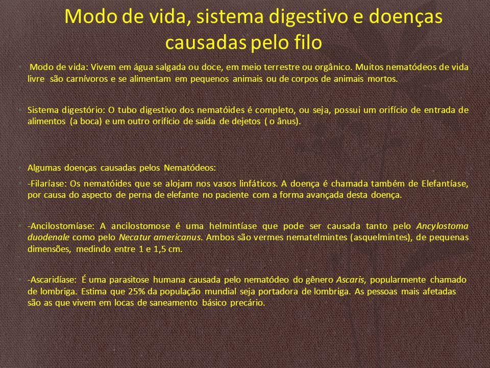 Modo de vida, sistema digestivo e doenças causadas pelo filo