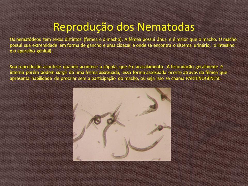 Reprodução dos Nematodas