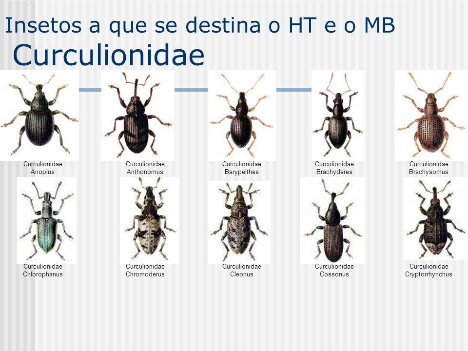 Insetos a que se destina o HT e o MB Curculionidae