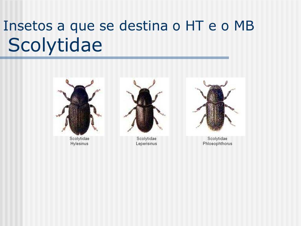 Insetos a que se destina o HT e o MB Scolytidae