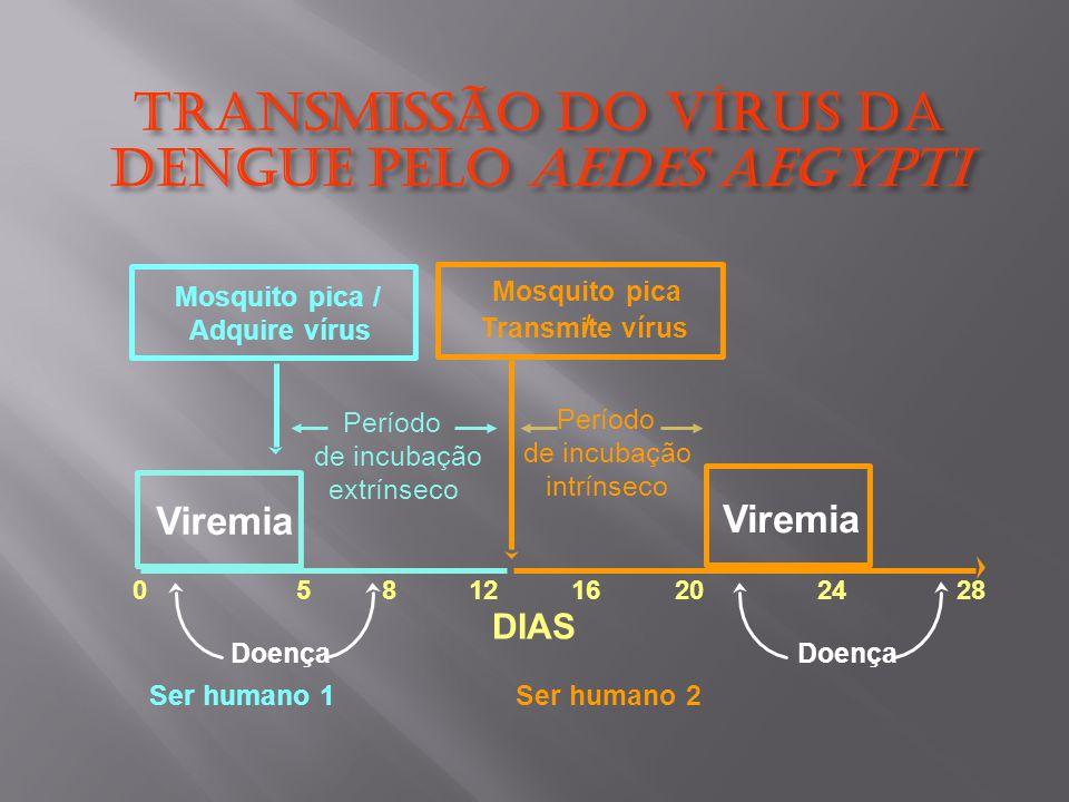 Transmissão do Vírus dA Dengue pelo Aedes aegypti