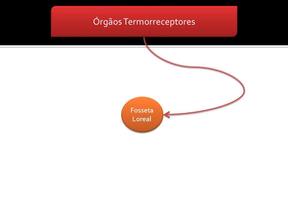 Órgãos Termorreceptores