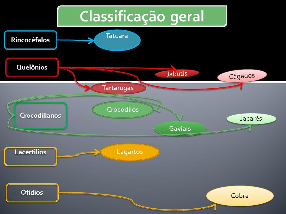 Classificação geral Tatuara Rincocéfalos Quelônios Jabutis Cágados