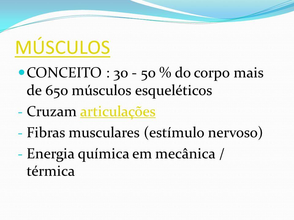 MÚSCULOS CONCEITO : 30 - 50 % do corpo mais de 650 músculos esqueléticos. Cruzam articulações. Fibras musculares (estímulo nervoso)