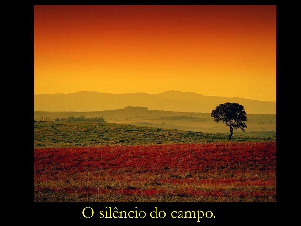 O silêncio do campo.