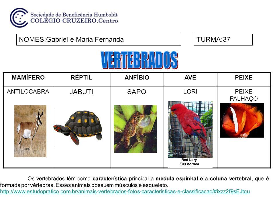 VERTEBRADOS NOMES:Gabriel e Maria Fernanda TURMA:37 JABUTI SAPO