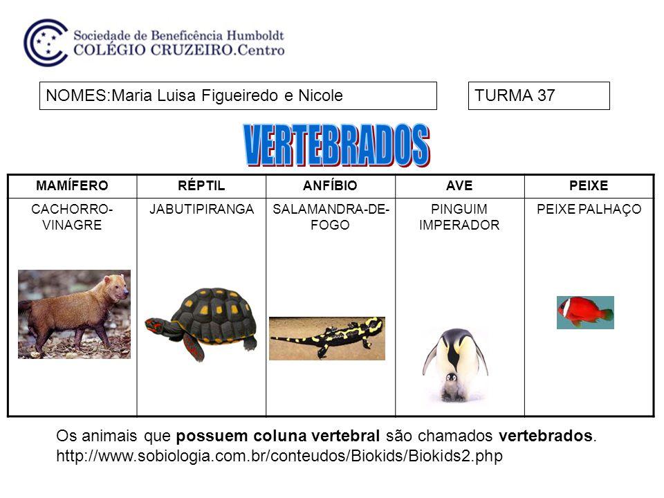 VERTEBRADOS NOMES:Maria Luisa Figueiredo e Nicole TURMA 37