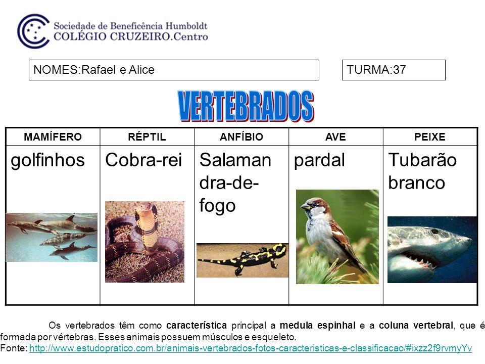 VERTEBRADOS golfinhos Cobra-rei Salamandra-de-fogo pardal