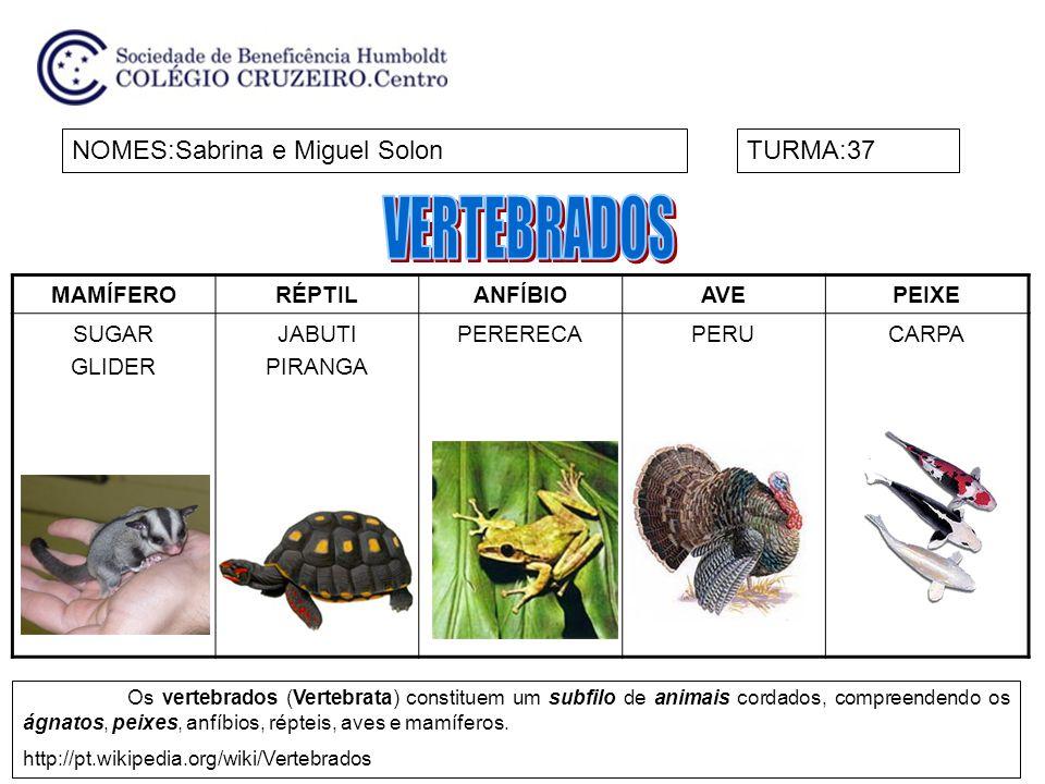 VERTEBRADOS NOMES:Sabrina e Miguel Solon TURMA:37 MAMÍFERO RÉPTIL